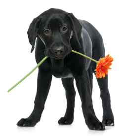 dog with flower2